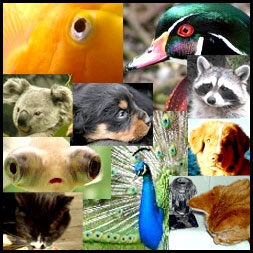 The Animal Kingdom  Which animal best represents YOUR personality?